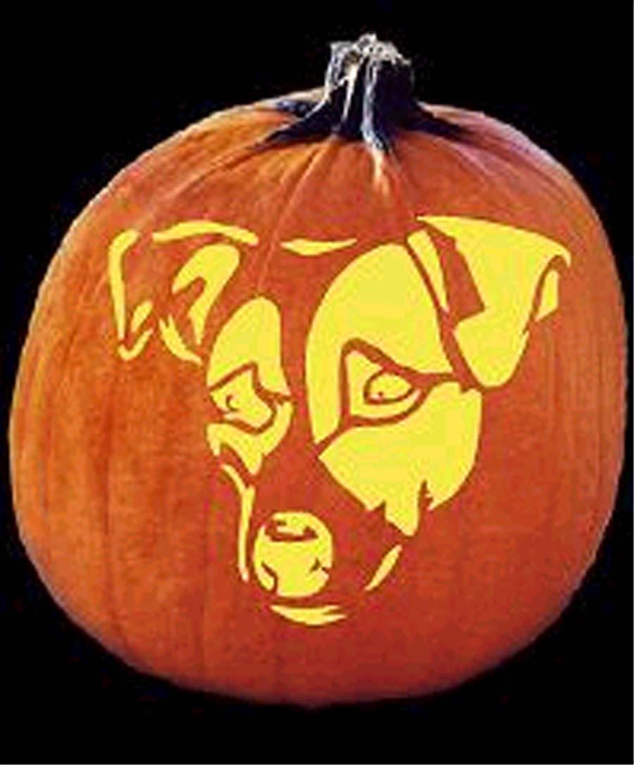 Terrierman s daily dose halloween jack o lantern