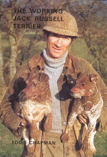 Short Hair Jack Russell Terrier. Jack Russell Terrier,