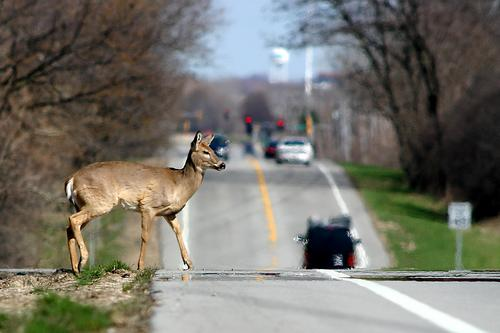 impacts of hunting The ecosystem effects of deer and the safety of hunters regulated hunting is an effective tool for managing and maintaining wild deer populations 2 at the same time, reg.