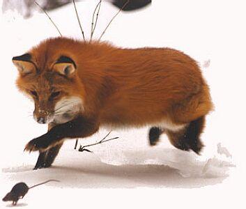 foxandmouse.jpg
