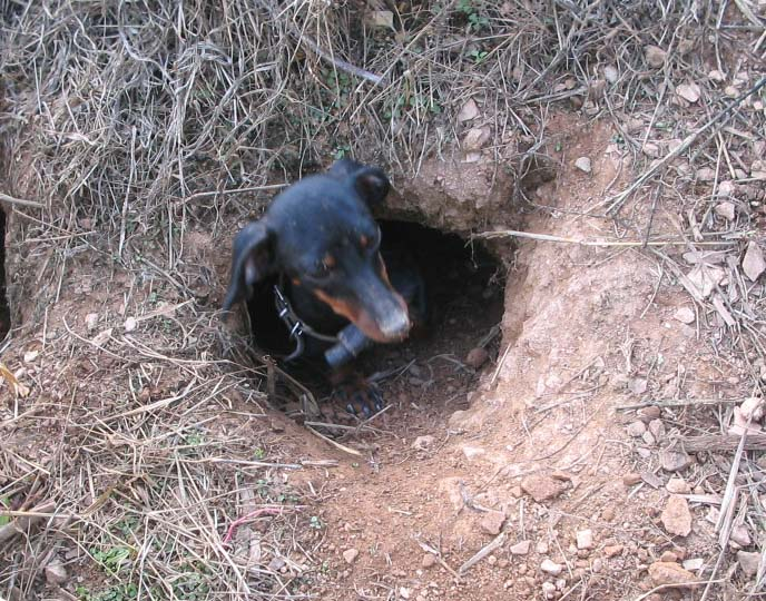 how to stop dog digging holes when your not around