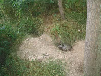 TUZAKLAR TUZAK ÇEŞİTLERİ Mountain-pipe-nicks-may-2007-2