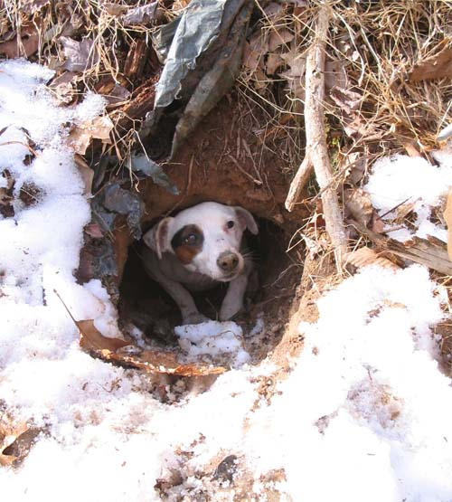 Possum track in snow. Possum tracks looks like martians made them,