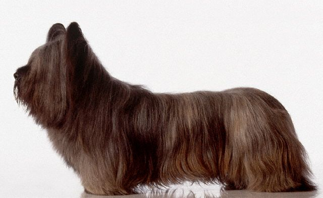 Time to Pull the Plug on the Skye Terrier